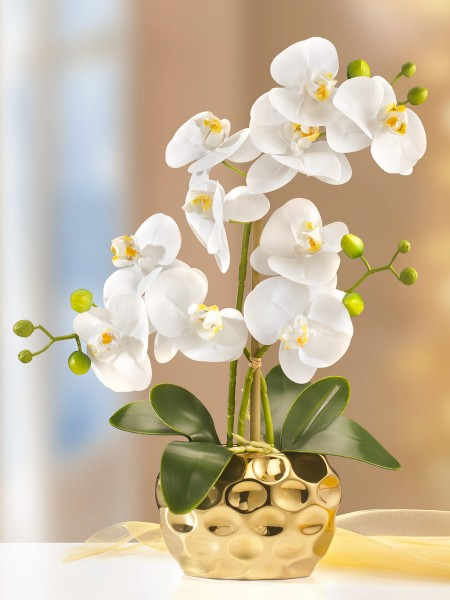 Gold-Orchidee