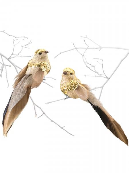 Goldvogel-Duo