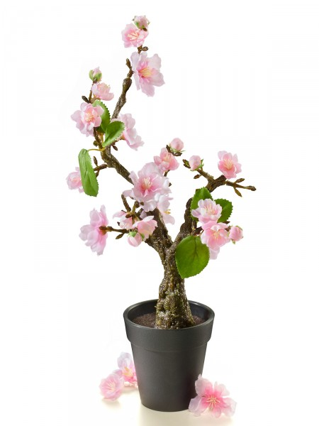 Kirschblüten-Bonsai