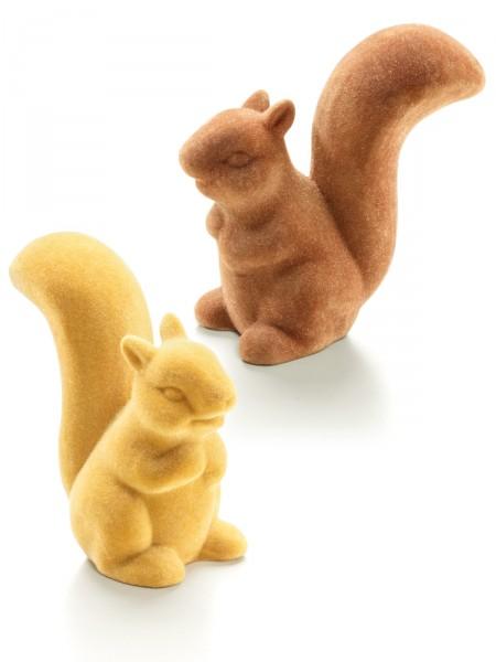 Eichhörnchen-Duo