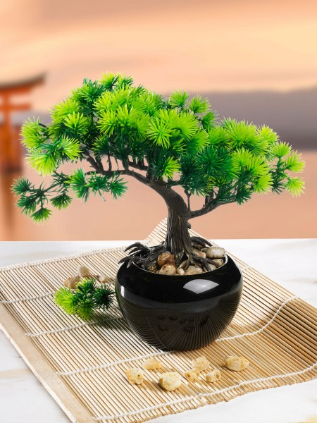 "Bonsai ""Lärche"""