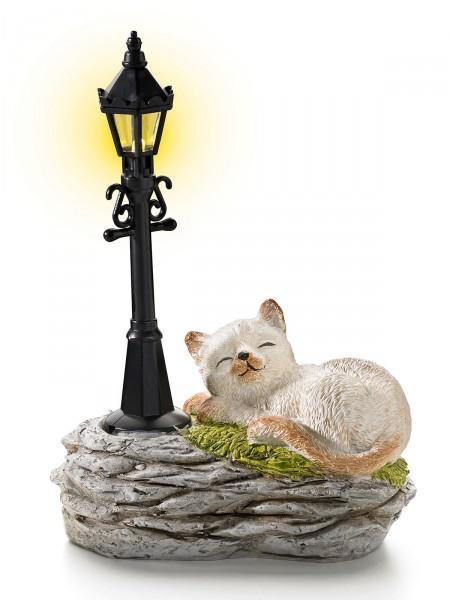Katze an LED-Laterne