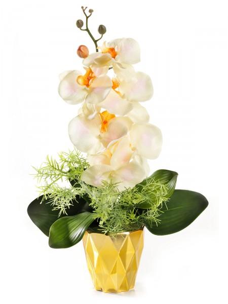 "Orchidee ""Apricot"""