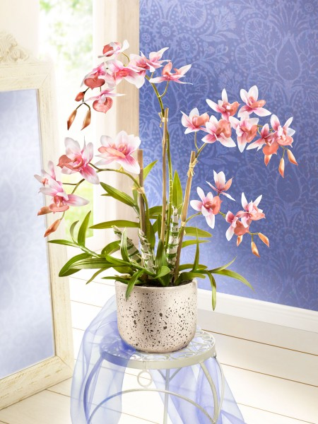 """Orchidee """"Royale"""""""