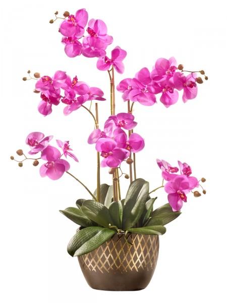 "Orchidee ""Aurelia """