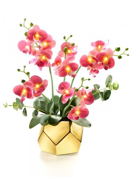 """Orchidee """"Lichterzauber"""""""