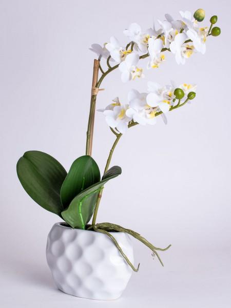 Orchidee Annabelle 33cm