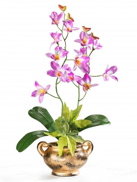 "Orchidee ""Goldtraum"""